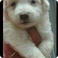 Adopt A Pet :: Luis - Hillside, IL