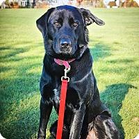 Adopt A Pet :: Hatchi - Bristol, CT