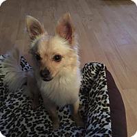 Adopt A Pet :: Molly - Yuba City, CA