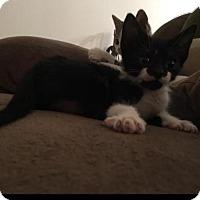 Adopt A Pet :: 406589 Wilma - San Antonio, TX