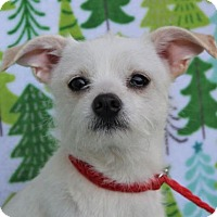 Adopt A Pet :: TIFFANY - Red Bluff, CA