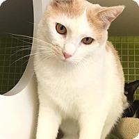 Adopt A Pet :: Alani - Converse, TX