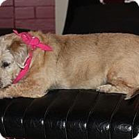 Adopt A Pet :: Susie - Hutchinson, KS