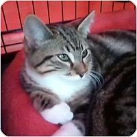Adopt A Pet :: Racer - Brea, CA