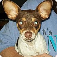 Adopt A Pet :: Mojo - Poway, CA