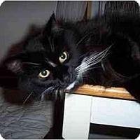 Adopt A Pet :: Zephyr - Portland, ME