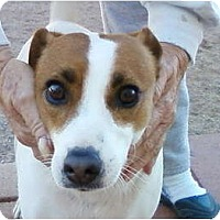 Adopt A Pet :: CALLIE - Scottsdale, AZ