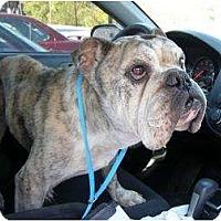 Adopt A Pet :: Bob - Winder, GA