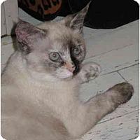 Adopt A Pet :: Julie  kitten - Cincinnati, OH