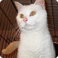 Adopt A Pet :: Snowball - Hampshire, IL