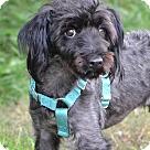 Adopt A Pet :: Gulliver