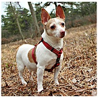Adopt A Pet :: Emma - Forked River, NJ