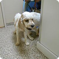 Adopt A Pet :: Abby-Adopted! - Kannapolis, NC