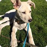 Adopt A Pet :: Axel - Preston, CT