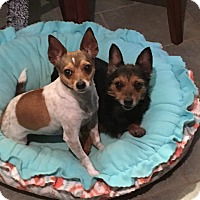 Adopt A Pet :: Bree and Brady - Homewood, AL