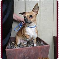 Adopt A Pet :: Sienna - Shawnee Mission, KS