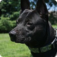 Adopt A Pet :: Bently D-70138 - Westampton, NJ