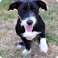 Adopt A Pet :: Korva - San Diego, CA