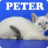 Adopt A Pet :: Peter - Carencro, LA