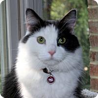 Adopt A Pet :: Bailee - Fairfax, VA
