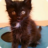 Adopt A Pet :: Paris - Highland, IN