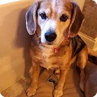 Adopt A Pet :: Ellie 2 - Savannah, GA