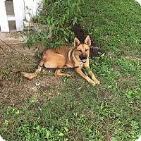Adopt A Pet :: Sasha - Longview, TX