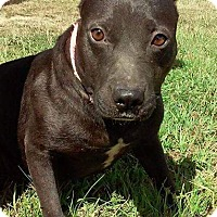 Adopt A Pet :: Zoey - Union Springs, AL
