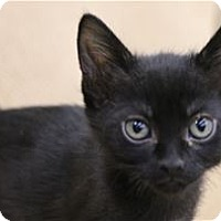 Adopt A Pet :: Waffle - Lincoln, CA