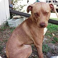 Adopt A Pet :: Pongo - Union Springs, AL