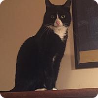 Adopt A Pet :: JO JO-$35.00 - Buford, GA