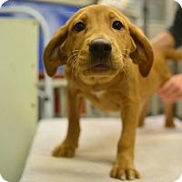Adopt A Pet :: April's Male Pups - Beacon, NY