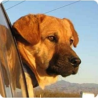 Adopt A Pet :: Trapper - Golden Valley, AZ