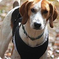 Adopt A Pet :: Felix - N. Berwick, ME