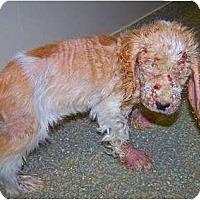 Adopt A Pet :: Quincy - Okatie, SC