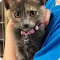 Adopt A Pet :: Binah - Green Bay, WI