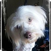 Adopt A Pet :: Daisy - Playa Del Rey, CA