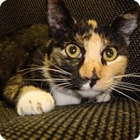 Adopt A Pet :: Fuzzy - Miami, FL
