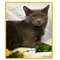 Adopt A Pet :: Jasper - Oviedo, FL