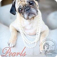 Pug Dog for adoption in Frederick, Maryland - Gabby
