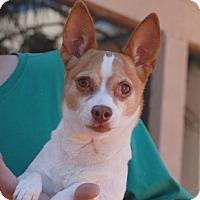 Adopt A Pet :: Ozzy - Las Vegas, NV