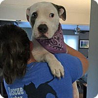 Adopt A Pet :: Jane - Greensboro, NC