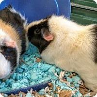 Adopt A Pet :: Abby & Annabelle - Newark, DE