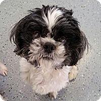 Adopt A Pet :: Hovan Hogan - Urbana, OH