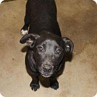 Adopt A Pet :: Laura - Sudbury, MA