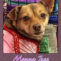 Adopt A Pet :: Momma June - Bogalusa, LA
