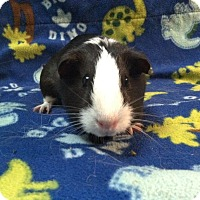 Adopt A Pet :: Alaska Bonded with Scott - Coral Springs, FL