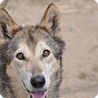 Adopt A Pet :: Maya - Dripping Springs, TX
