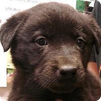 Adopt A Pet :: Maynard - Erwin, TN