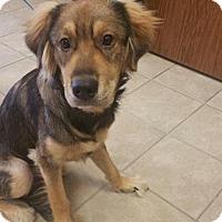 Adopt A Pet :: TAD - Conroe, TX